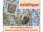 Lire la suite de Le frelon asiatique